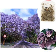 100X Royal Purple Paulownia Empress Fastest Growing Tree Kiri Tomentosa Seed