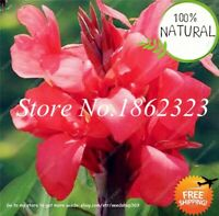 Colorful Canna Lily Seeds Plants Bonsai Diy Potted Outdoor Indoor 100pcs