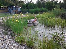 150 Teichpflanzen, Sumpfpflanzen, Wasserpflanzen  für 0 bis 50 cm Wasserstand