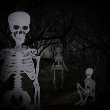 90CM Life Human Anatomical Anatomy Skeleton Medical Model School Teaching