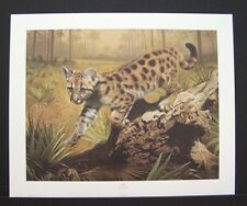 "Charles Frace Signed Limited Edition Print ""Uno"" Florida Panther"