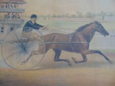 "c.1875 - ""Lulu"" Antique Horse Racing Print - Trotter - Lithograph"