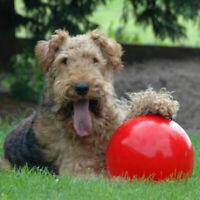 Boomer Red Ball Indestructible Dog Toy Various puppy Pet Toys Nice I4W2