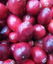 "♫ CANNEBERGE ou ""CRANBERRY du CANADA"" - Vaccinium macrocarpon ♫ Fruits-Graines ♫"