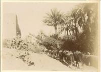 Algérie, Oasis de Beni Isguen (Ghardaia)  Vintage citrate print.  Tirage cit