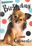CUTE LITTLE  DOG ,HAPPY BIRTHDAY CARD,MIXED BREED DOG..(B2)