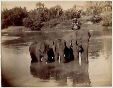 Photo Skeen & Co - Ceylon - Elephants in the river - India - Albumine - 1880 -