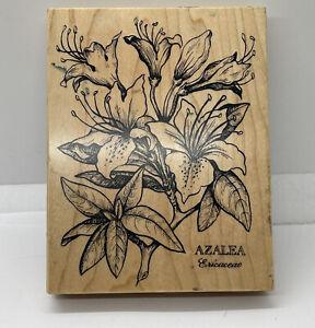 PSX Botanical Azalea Flowers Wood Mounted Rubber Stamp Vintage