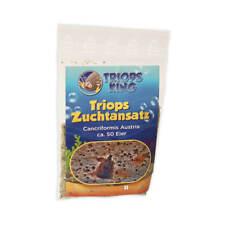 Triops Cancriformis Urzeitkrebse Zuchtansatz mit Triopseiern im Sand gemischt