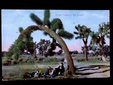 c1909 Yucca Palms In The Desert, Calif.Crawston Ostrich Farm Vintage Db Postcard