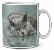 British Blue Cat Laying on Glass Coffee/Tea Mug Christmas Stocking Fill, AC-11MG