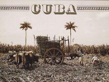 "Postcard-Cuba- "" Gathering Sugarcane auf einem Plantation "" -1900-1906- (V-35)"