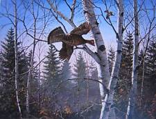 Ruffed grouse by David Maass