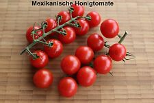 Mexikanische Honigtomate süße ertragreiche Sorte Miel de Mexique 15 Samen