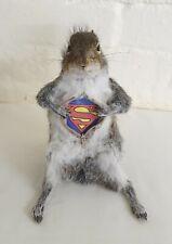 More details for taxidermy: super squirrel{sciurus carolinensis}