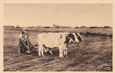 French-Canadian farmer tilling his land with Oxen, QUEBEC, Canada, 10-20s