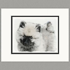 Keeshond Puppy Portrait Original Art Print 8x10 Matted to 11x14
