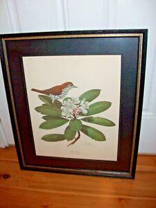 Ray Harm Print Lithograph 1970 WOOD THRUSH framed vintage wall wildlife artwork