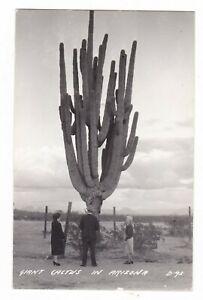 c1950 RPPC GIANT SUGUARO CACTUS AJO ARIZONA SONORAN DESERT VINTAGE POSTCARD AZ !