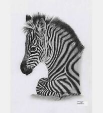 """Counted Cross stitch Kit """"Zebra Foal"""" by Andrea's Designs"""