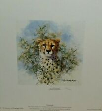 cheetah cameo david shepherd limited edition