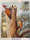 "Louis Agassiz Fuertes & The Singular Beauty of Birds, ""Golden Woodpecker"" Print"