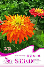 Original Package 30 Youth-and-old-age Seeds Zinnia Elegans Fireworks Flower A194