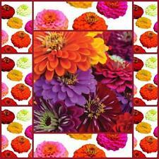 Zinnia Tall formula mix 50 flower seeds great cutfower attracts butterflies