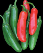 Serrano Tampiqueno Pepper Seeds, Heirloom Hot Pepper Seeds, Chili Peppers, 50ct