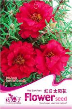 Original Package 200 Red Sun Plant Seeds Heronsbill Flower Seeds A041