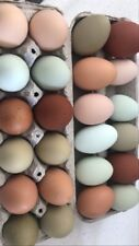 Rainbow Mix Hatching Eggs 13+ Barnyard Marans
