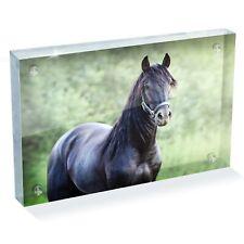 "Black Andalusian Horse Photo Block 6 x 4"" - Desk Art Office Gift #12494"