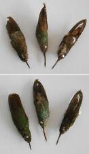 ANTIQUE TAXIDERMY BIRD - OISEAU Empaillé Taxidermie / Colibri Hummingbird