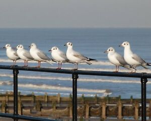 Print Photograph Seascape Birds Wall Decor 10x8 Seagulls (Poster Art Picture)