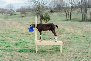 New Goatstand.com Carpenter Built Goat Milking Stand - Full 42in. Untreated Deck