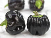 Paprika Midnight Dreams Süß - 10+ Samen - Saatgut - Seeds - Gemüsesamen