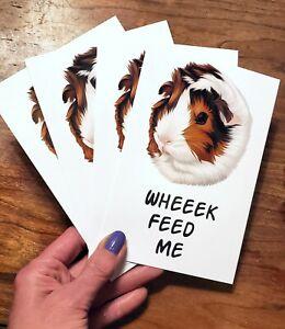 Piggies Choice Handsome Guinea Pig Postcards Pack of 10