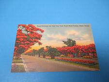 Royal Poinciana Miami Florida 1940  Postmarked Vintage Color Postcard PC28