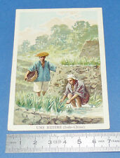 CHROMO 1900-1910 ECOLE BON-POINT GRANDE IMAGE UNE RIZIERE INDOCHINE ANNAMITES