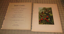 """1885 WEAVER BIRDS Animate Creation: Our Living World COLOR 9"""" x 12"""" Book Print"""