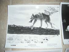 The Legend of Lobo Disney Wolf B&W 8x10 Promo Photo Original Lobby 1962