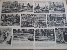Photo article RHS Chelsea Flower Show 1954 Ref O54