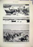 Original Old Antique Print 1884 Rebellion Soudan Mules Suakim Cavalry Trinkitat