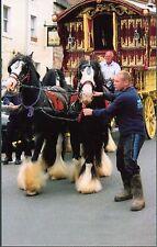 Romany Gypsy Ledge Wagon & Horses Appleby 2014 Reading VardoBow Top Wagon p.c