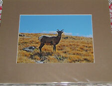 PHOTO ART MOUNTAIN GOAT MT EVANS CO 5X7 MATTED TO 8X10 SIGNED #'D 52/125
