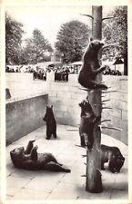 POSTCARD     BEARS    Brown  Bears    BERN  Zoo   III