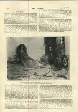 1897 Origin Of The Harp Macivor Grierson Rumpelstiltskin Henry Rheam