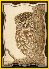 "Little Owl ACEO Ltd Ed Print ""Peek-a-Boo"""