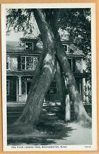 The Four Legged Tree Bridgewater Ma 1930's