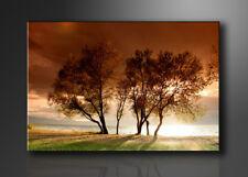 Bilder auf Leinwand Natur 120x80cm XXL 5025 neu Alle Wandbilder fertig gerahmt